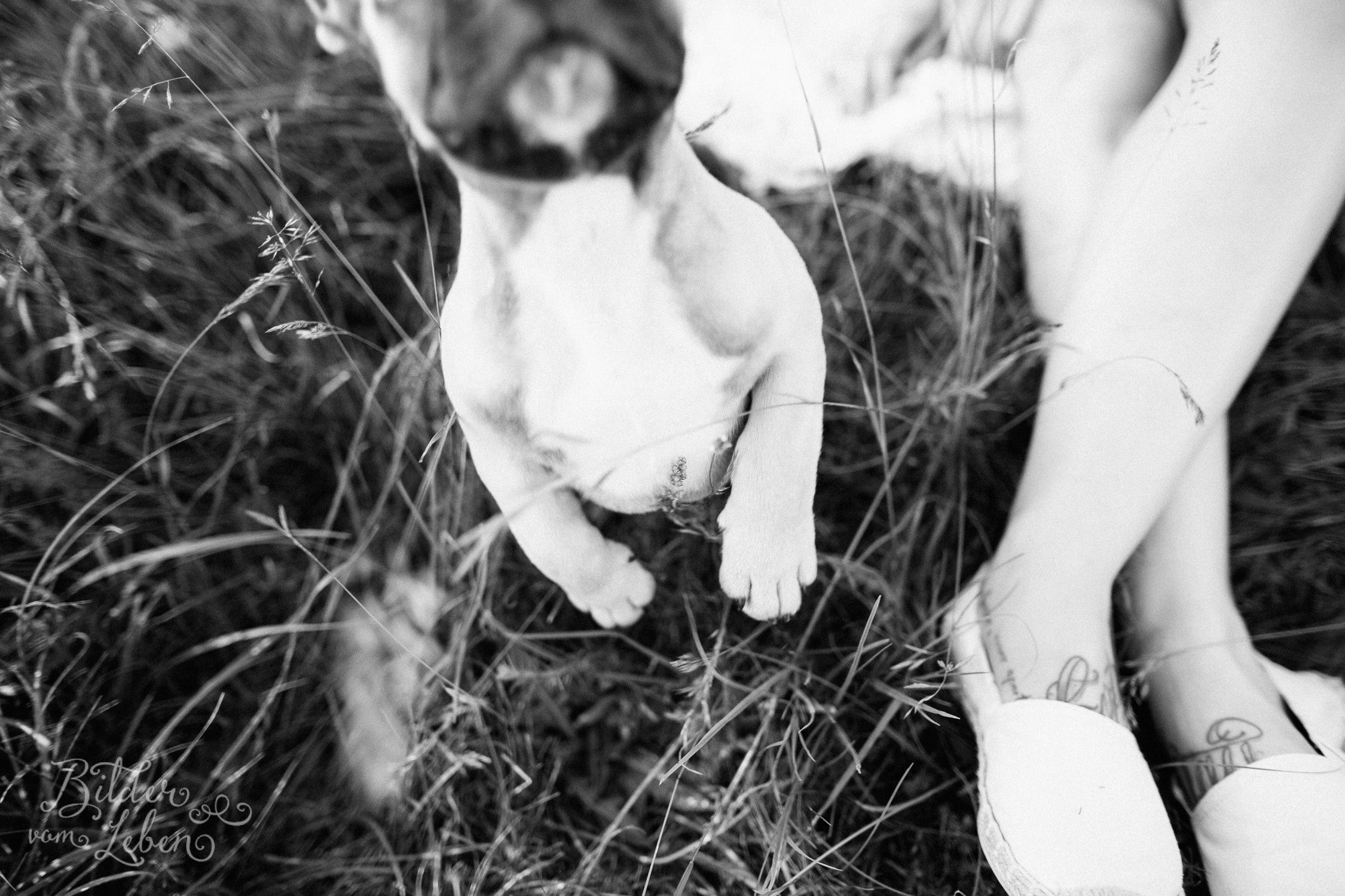Franzoesische-Bulldogge-Portraits-BildervomLeben-2016-7411