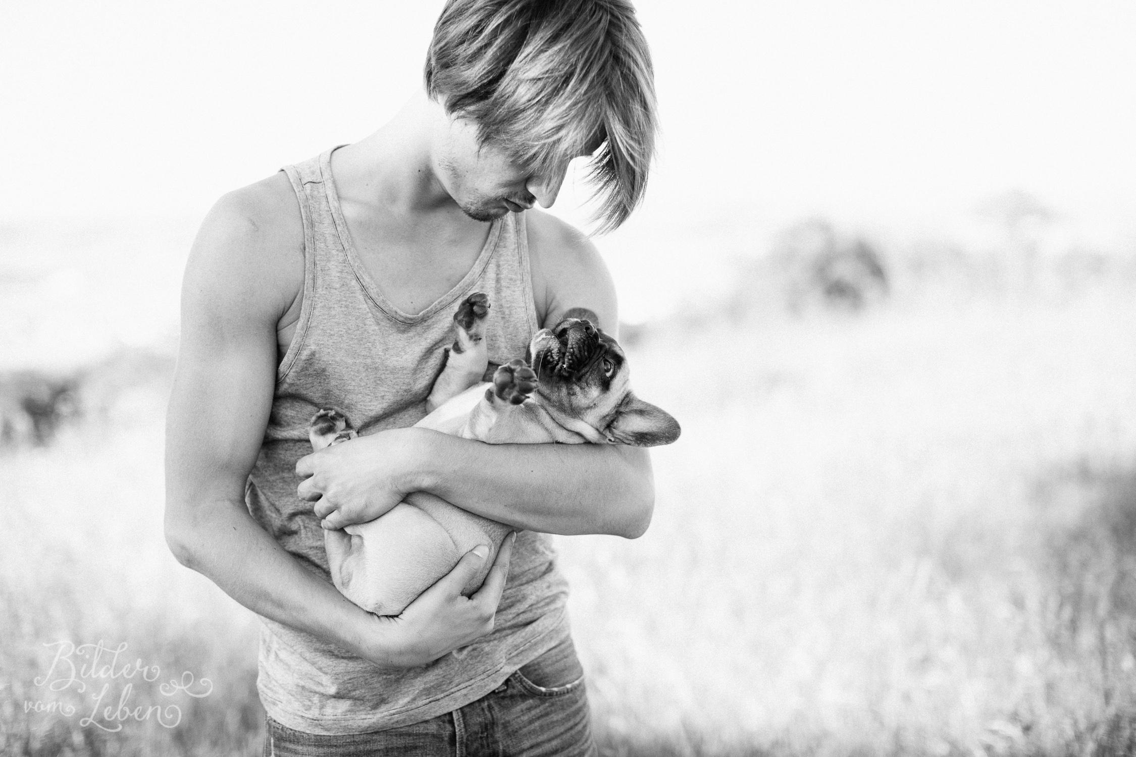Franzoesische-Bulldogge-Portraits-BildervomLeben-2016-7534