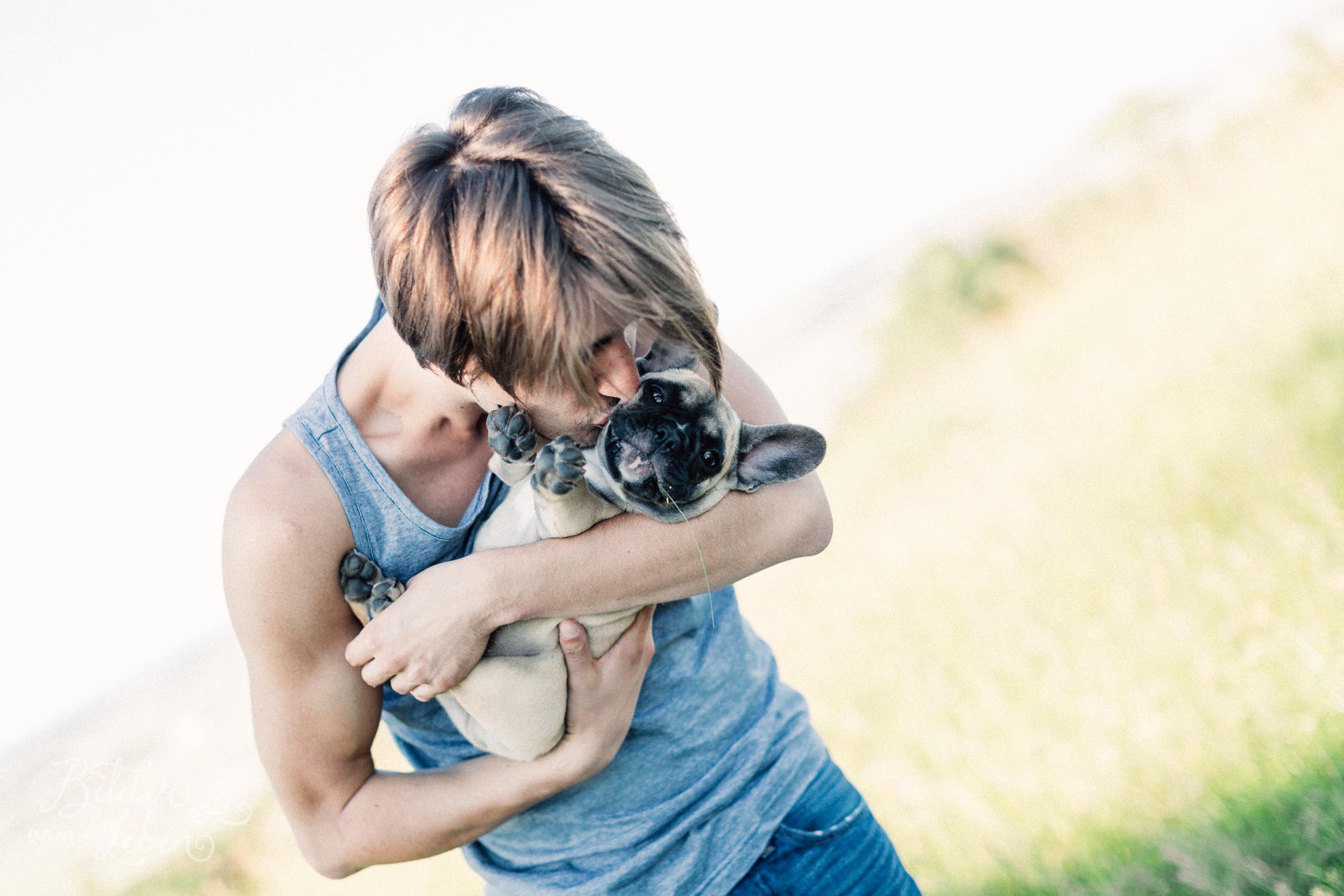 Franzoesische-Bulldogge-Portraits-BildervomLeben-2016-7535