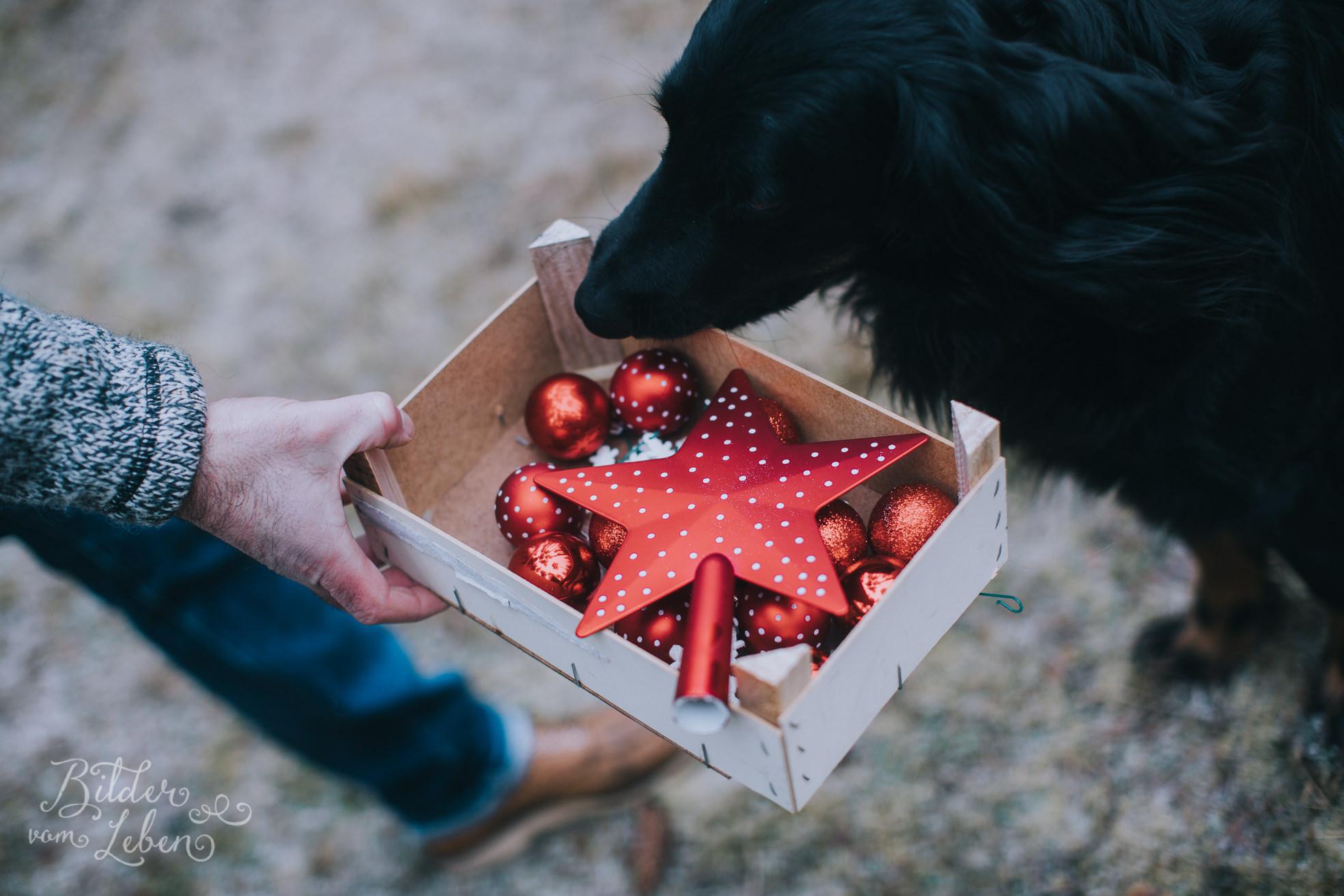 0006weihnachten-bildervomleben-imc39447