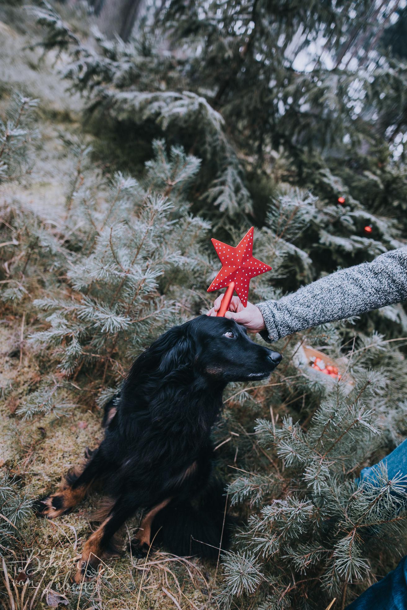 0015weihnachten-bildervomleben-imc39506