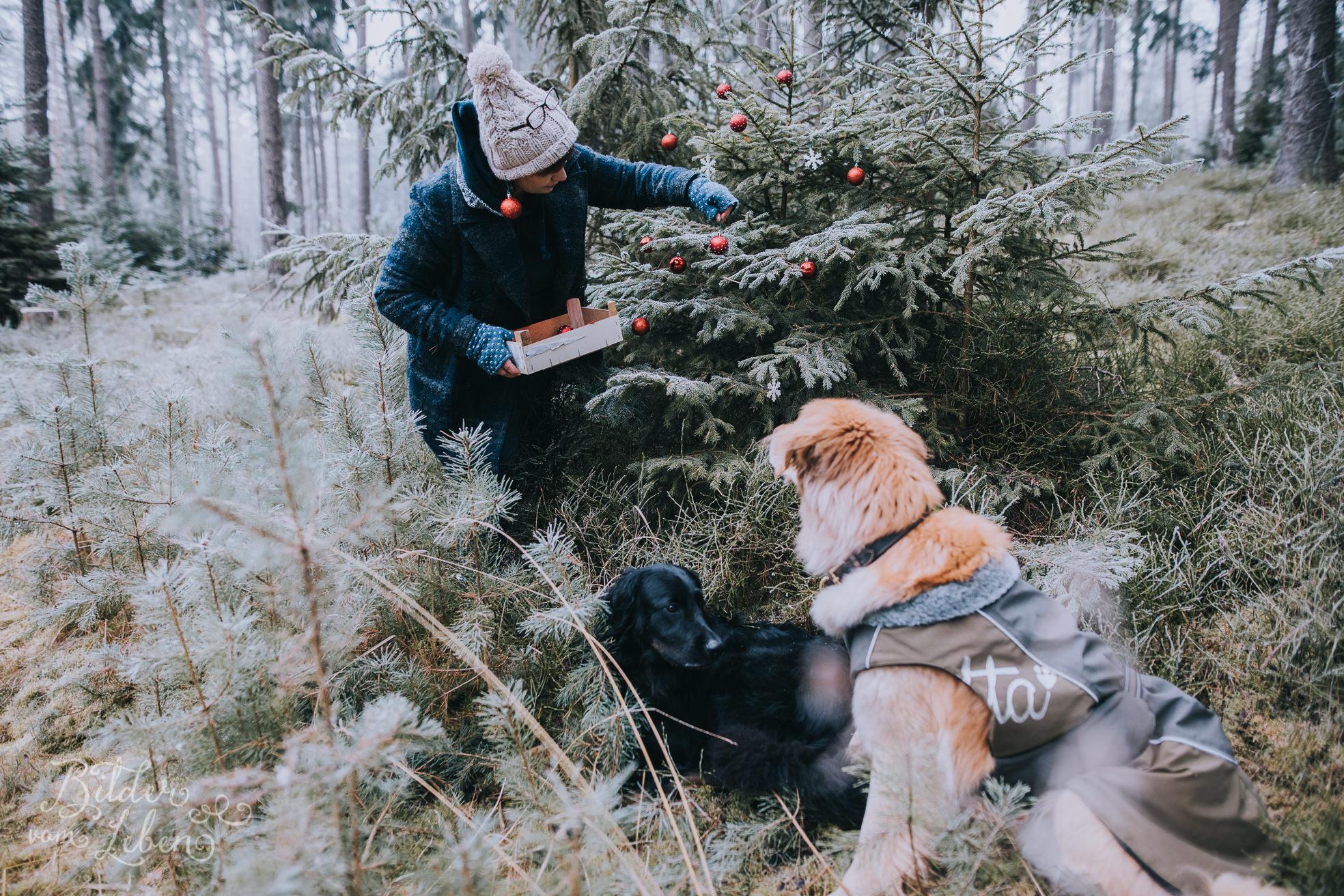 0036weihnachten-bildervomleben-imc39633