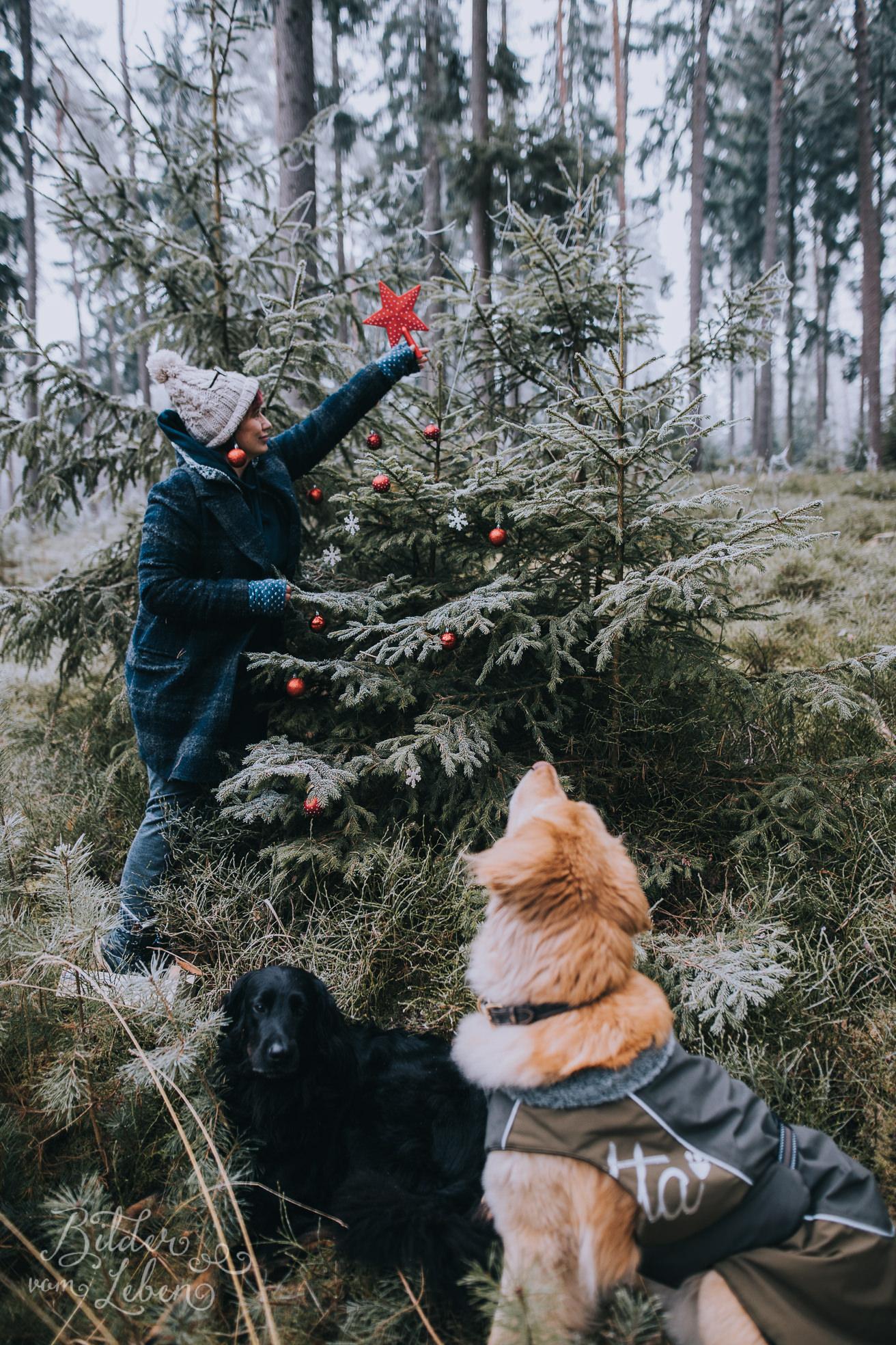 0038weihnachten-bildervomleben-imc39651