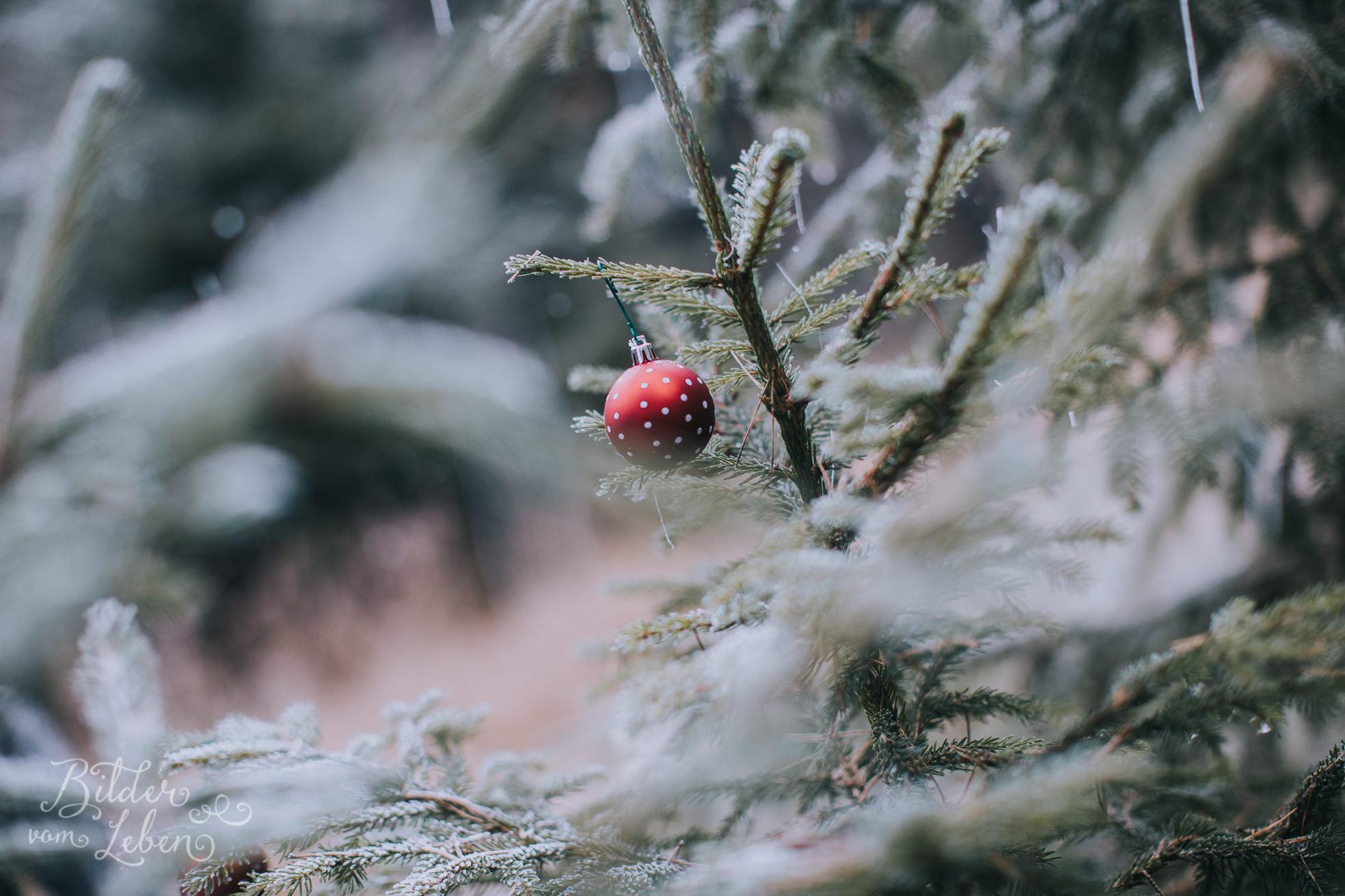 0041weihnachten-bildervomleben-imc39684