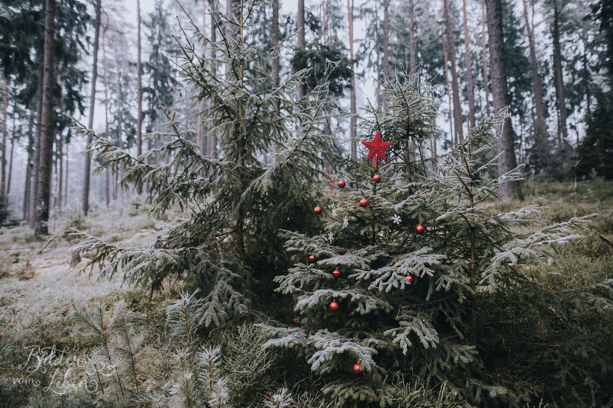 0049weihnachten-bildervomleben-imc39738