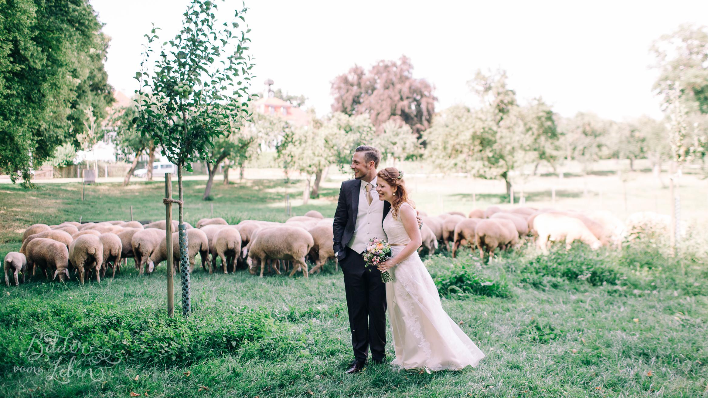 Franzi-Mike-Hochzeitsfotos-Triesdorf-IM2C2155