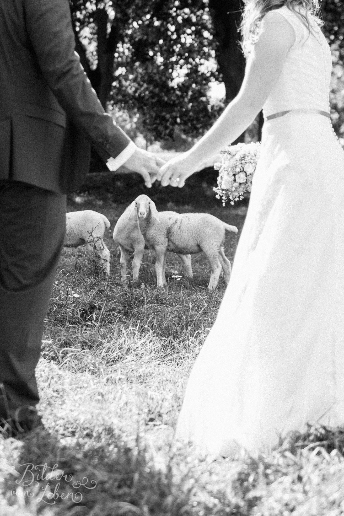 Franzi-Mike-Hochzeitsfotos-Triesdorf-IM2C2244