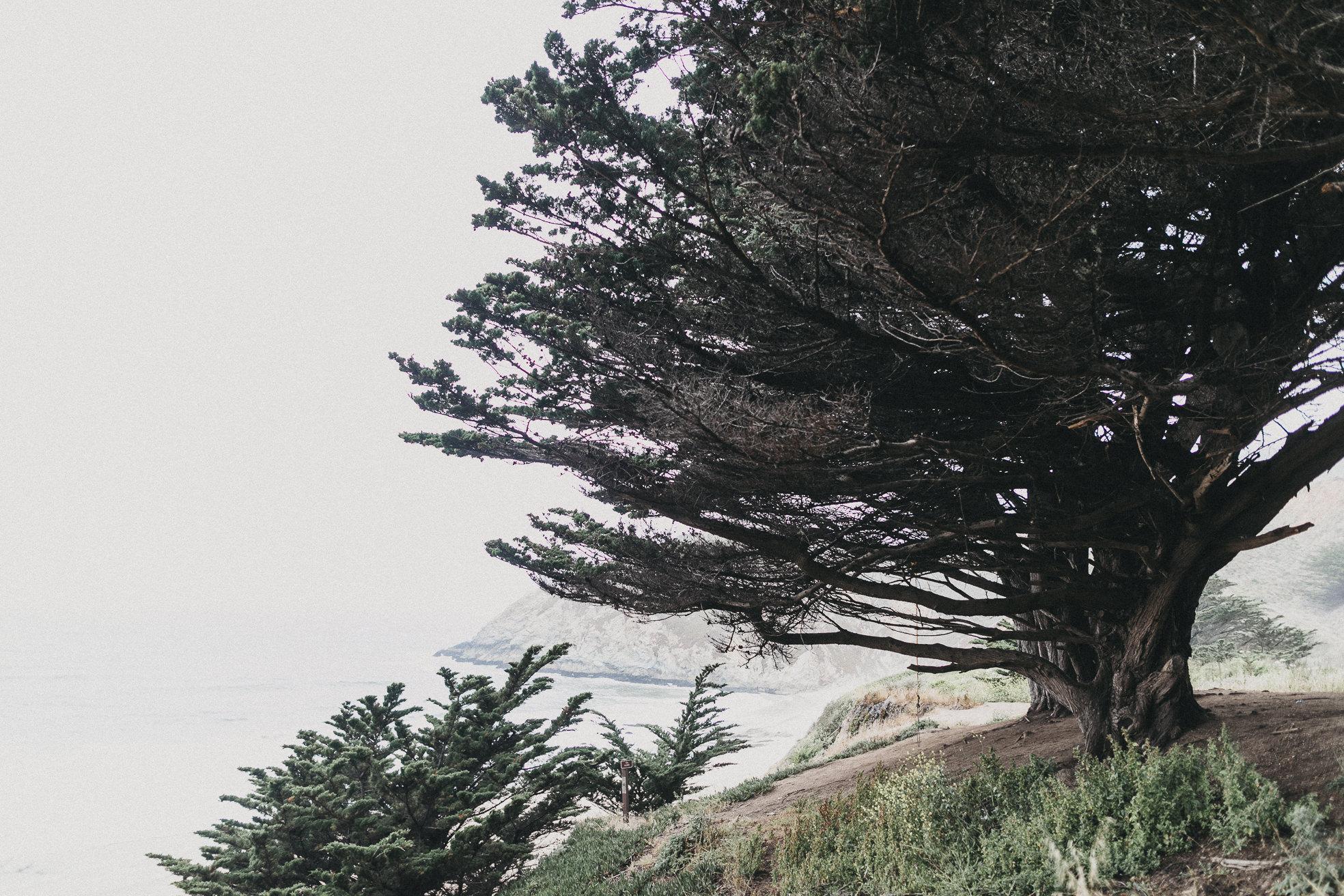 San-Francisco-BildervomLeben-9896