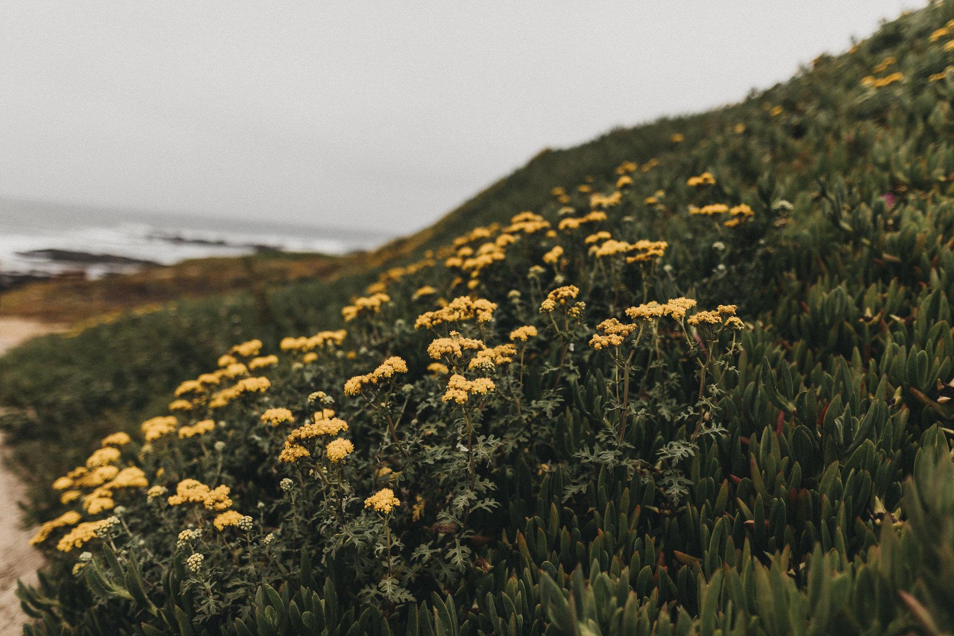 San-Francisco-BildervomLeben-9910