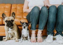 Babybauch, Hunde, Studioaufnahmen, Schwangerschaft, BildervomLeben, Bildkollektiv